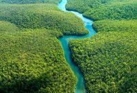 Manfaat Sistem Pertanian Agroforestri Menurut Para Ahli