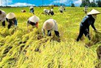 """""""Sistem Pertanian Tradisional"""" Pengertian, Kekurangan, dan Kelebihan"""