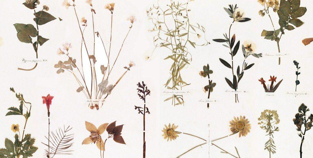 pengertian Herbarium menurut para ahli
