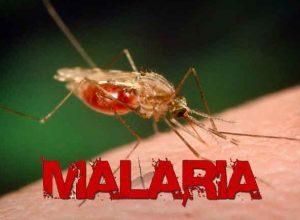Pengertian Malaria Menurut Para Ahli