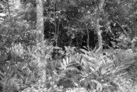 Pengertian Agroforestri Menurut Para Ahli
