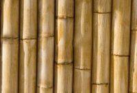 pengertian bambu menurut para ahli