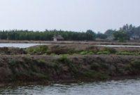 Pengertian Rumput Laut